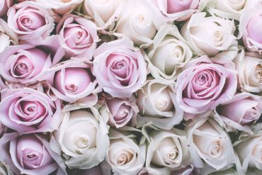Vintage floral iPhone Wallpaper Collection