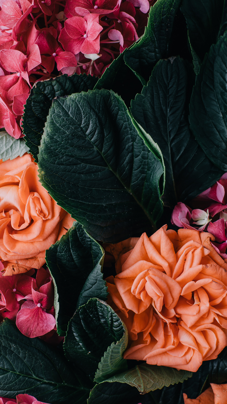 Colorful Roses Iphone Wallpapers