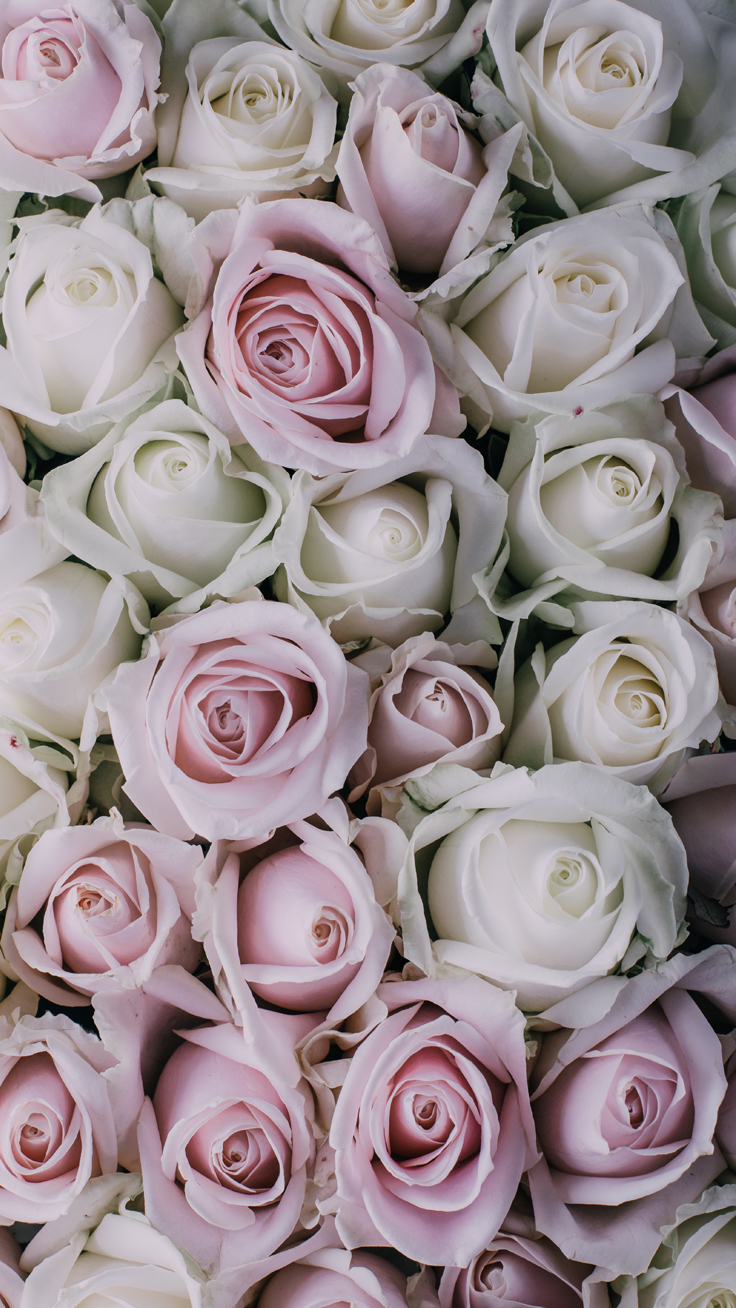 Roses Iphone Wallpapers