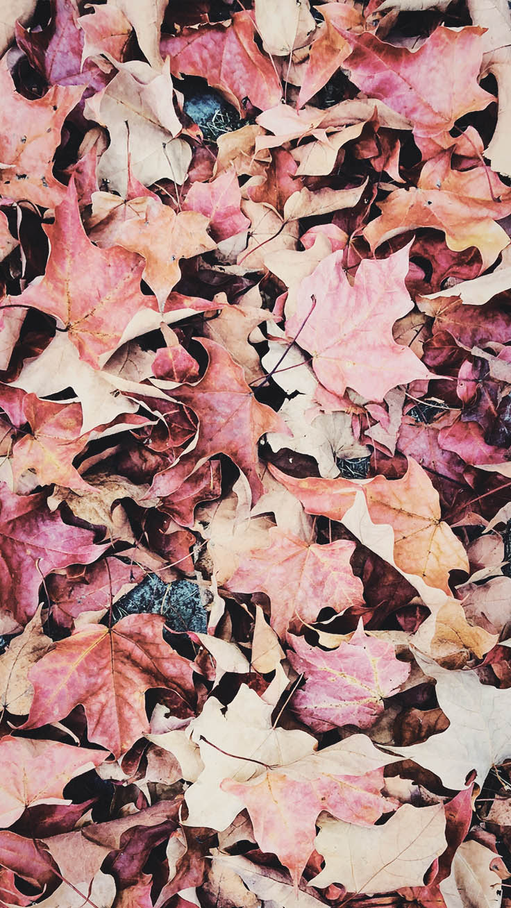 Fall iPhone Wallpaper Collection 15