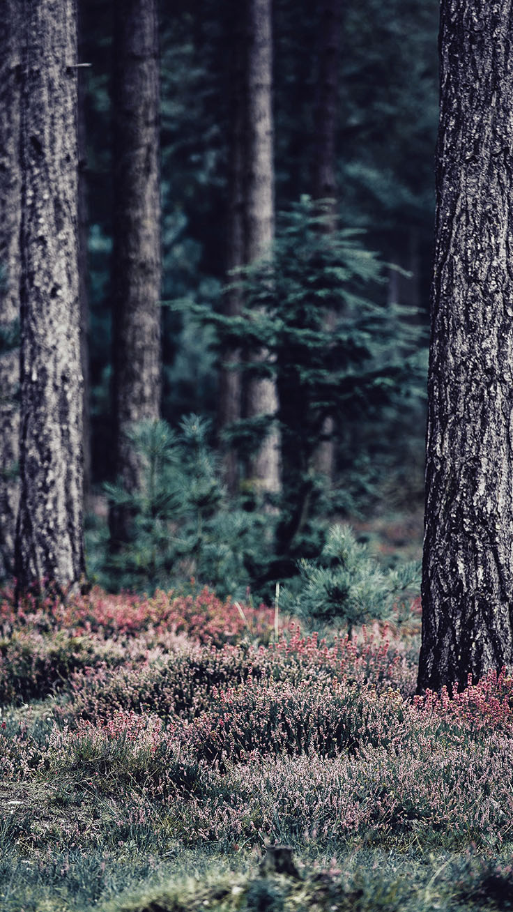 Bringing The Forest To You With 9 Free Iphone X Wallpapers