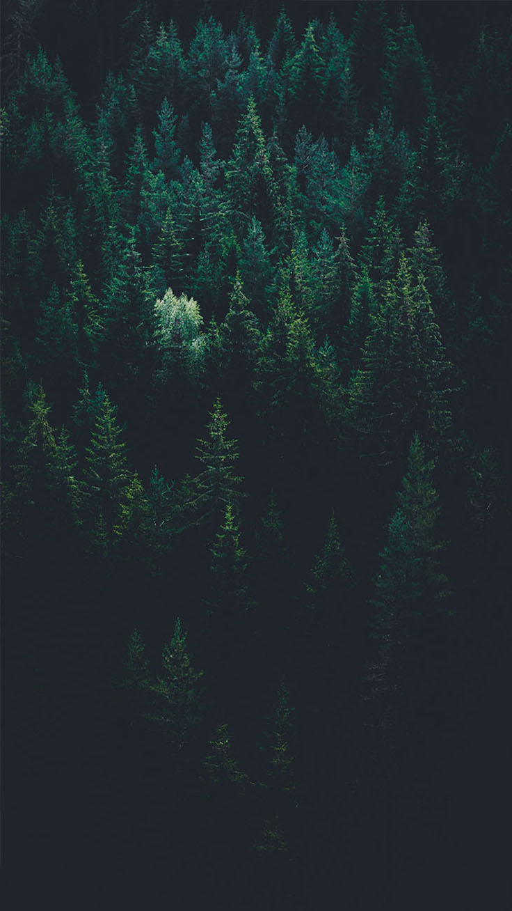 Dark Forest iPhone X Wallpaper