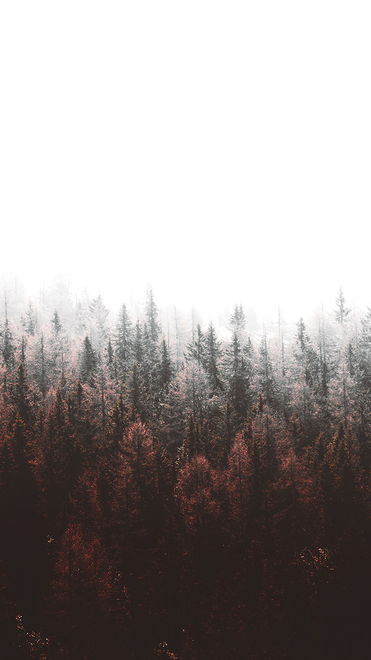 Tap to download! Free Forest iPhone X Wallpapers by preppywallpapers.com