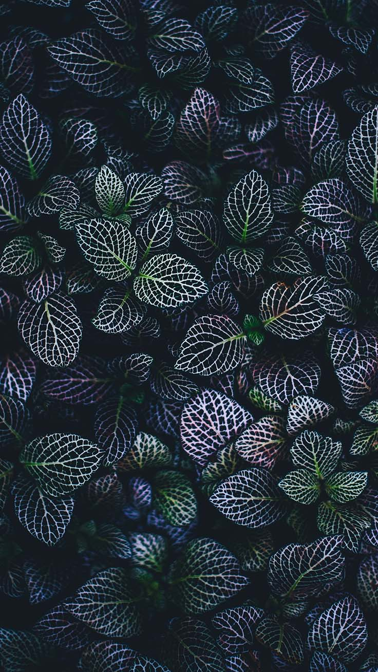 Super Pretty iPhone X Wallpapers by preppywallpapers.com