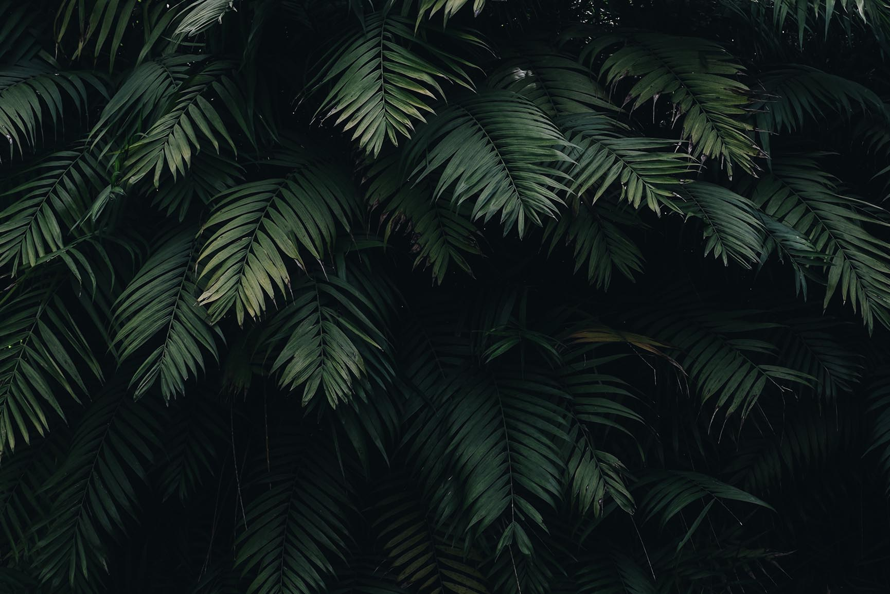 10 Tropical Jungle Iphone X Wallpapers Preppy Wallpapers