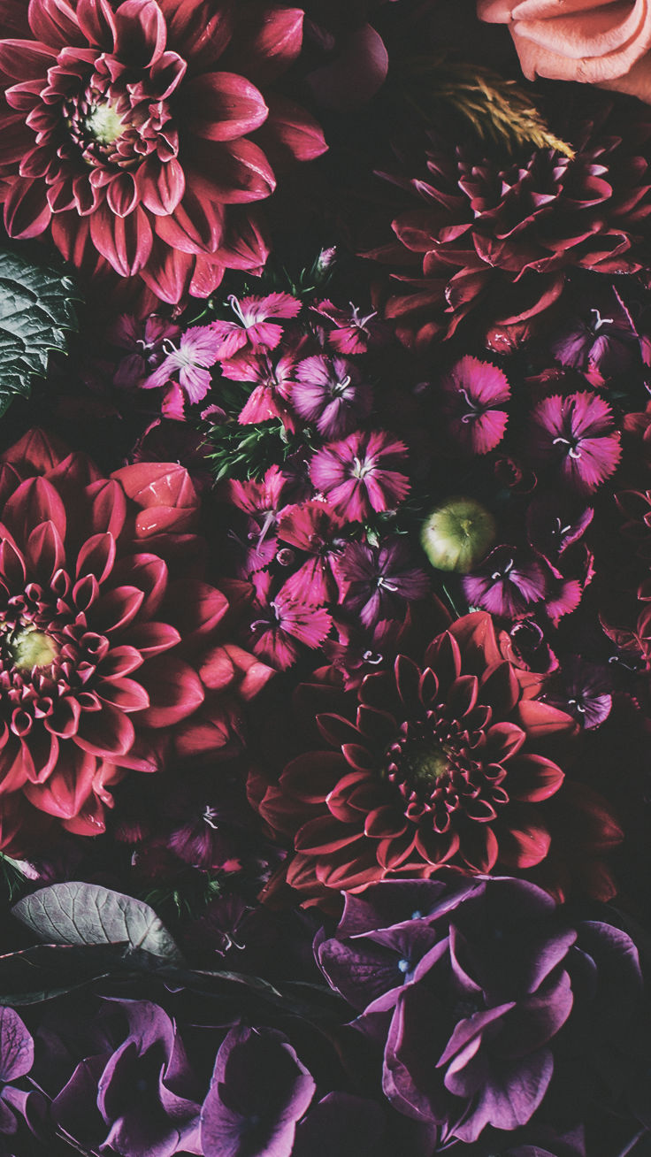 Floral Iphone Xs Max Wallpaper