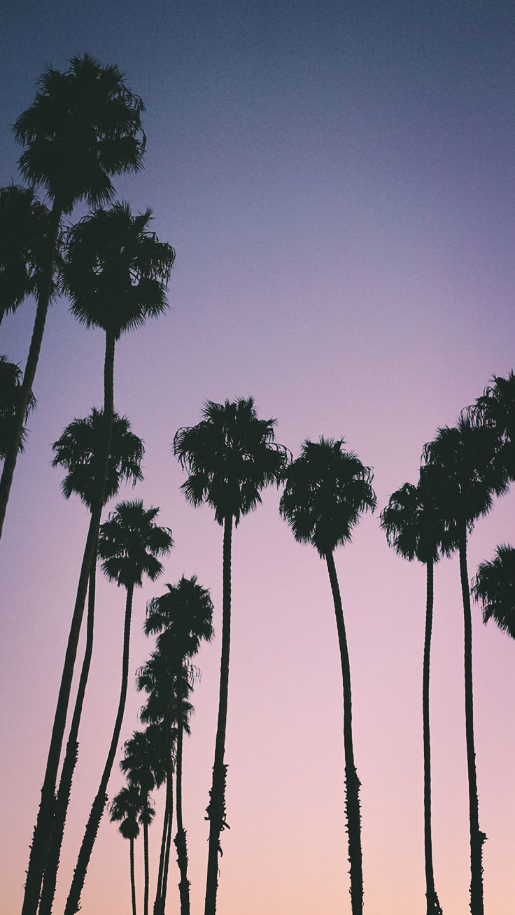 9 Summer Sunset Iphone Wallpapers To Kill That Winter