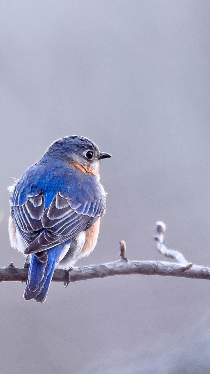 Birds iPhone Wallpaper Collection by Preppy Wallpapers