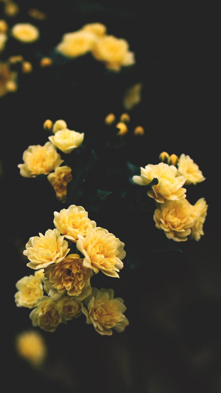Floral iPhone Wallpaper Collection