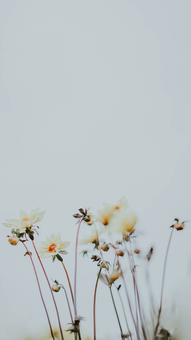 Mindful iPhone Wallpapers by Preppy Wallpapers