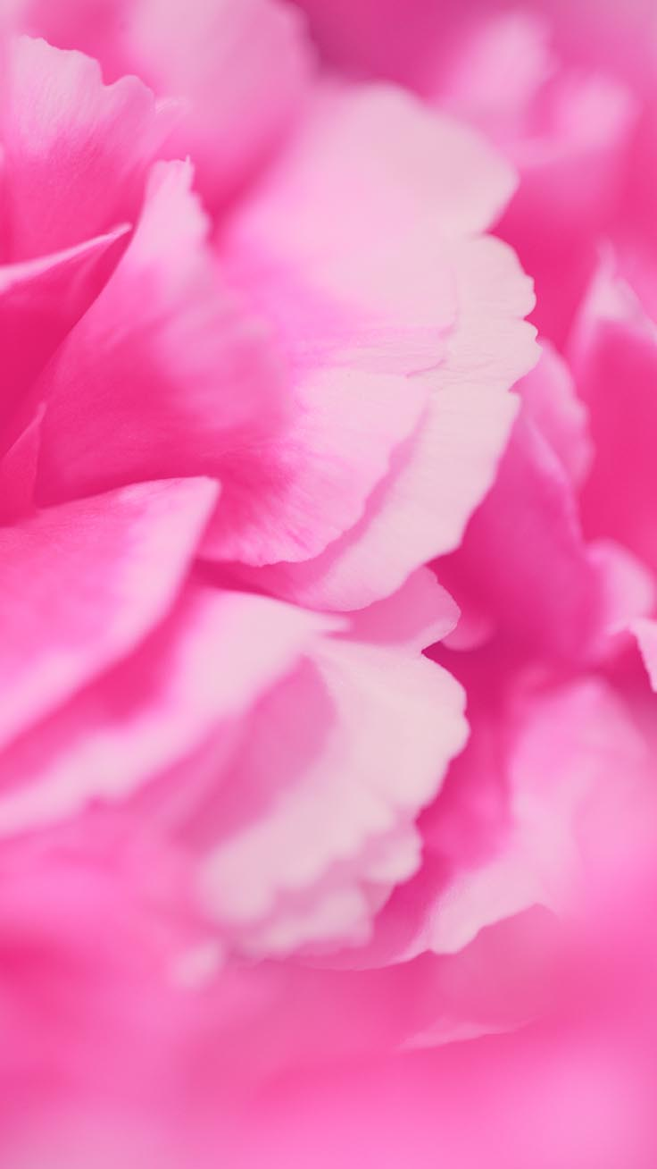 Floral Roses iPhone Wallpaper by Preppy Wallpapers