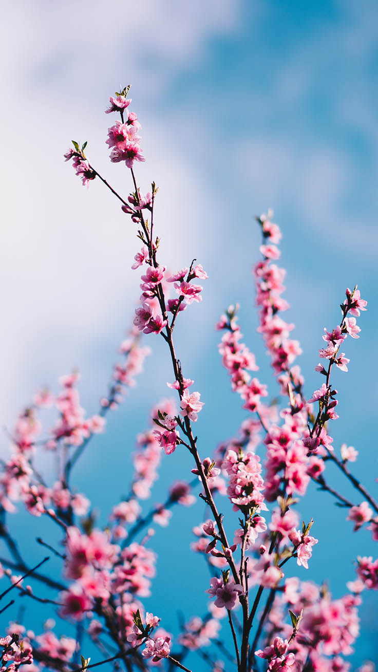 Spring Blossom iPhone Wallpapers by Preppy Wallpapers