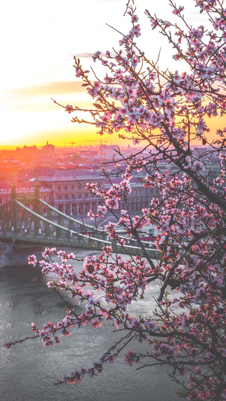 13 Gorgeous Spring Blossom Iphone Wallpapers Preppy Wallpapers
