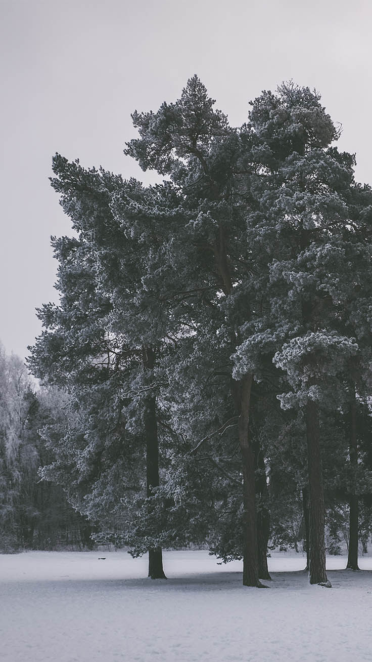 Winter Wonderland iPhone Wallpapers by Preppy Wallpapers
