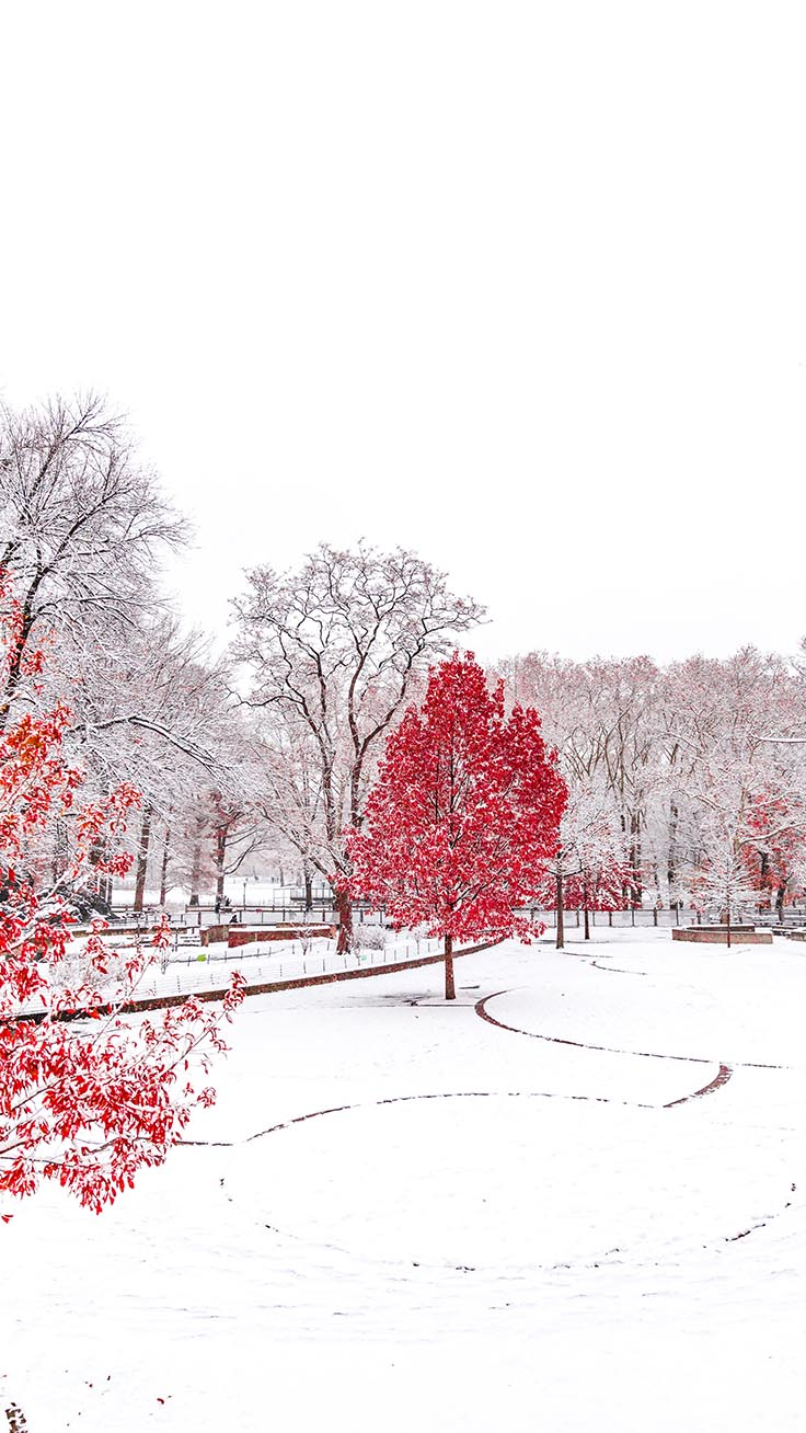 Winter Wonderland iPhone Wallpapers by Preppy Wallpapers