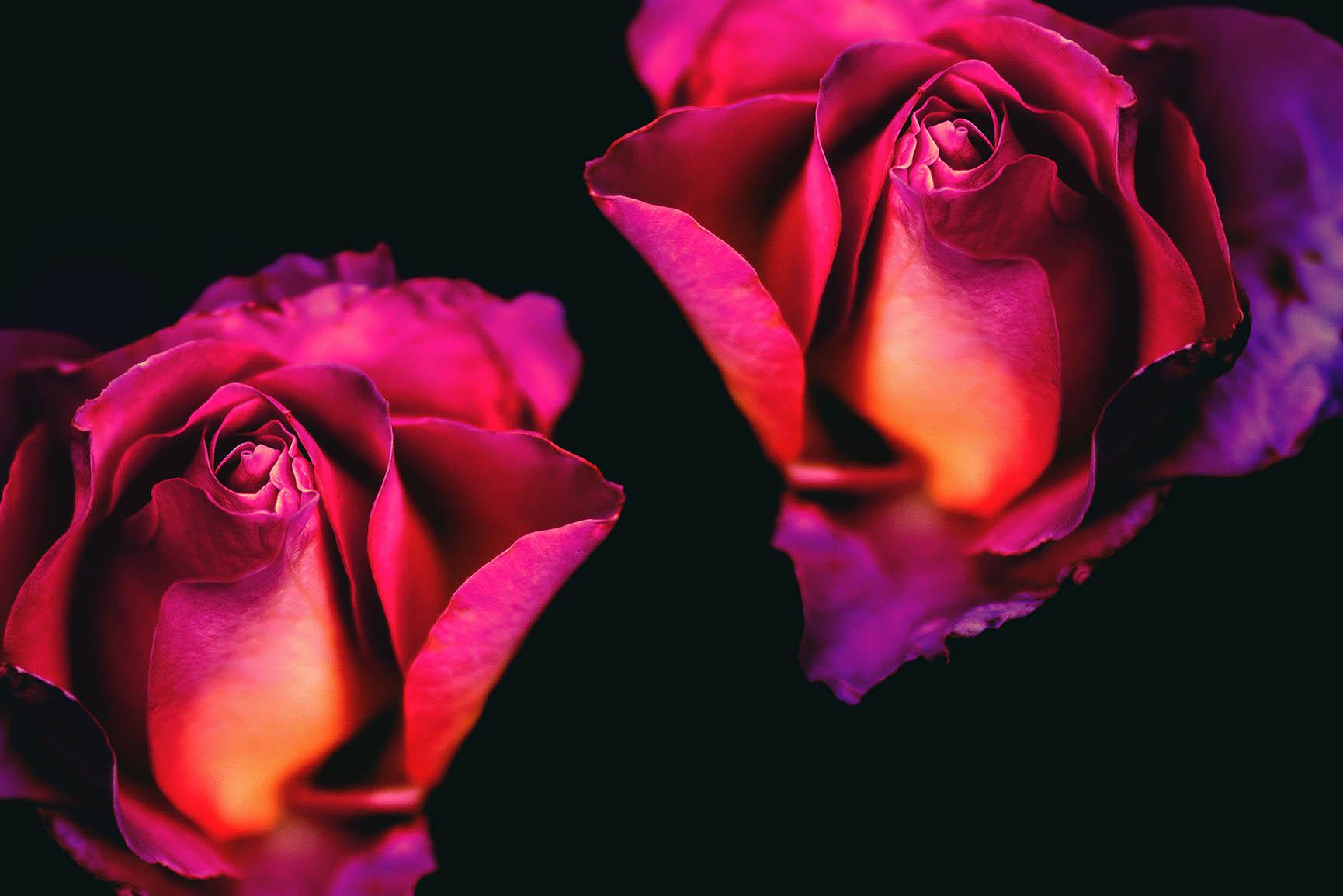 29 Romantic Roses iPhone X Wallpapers