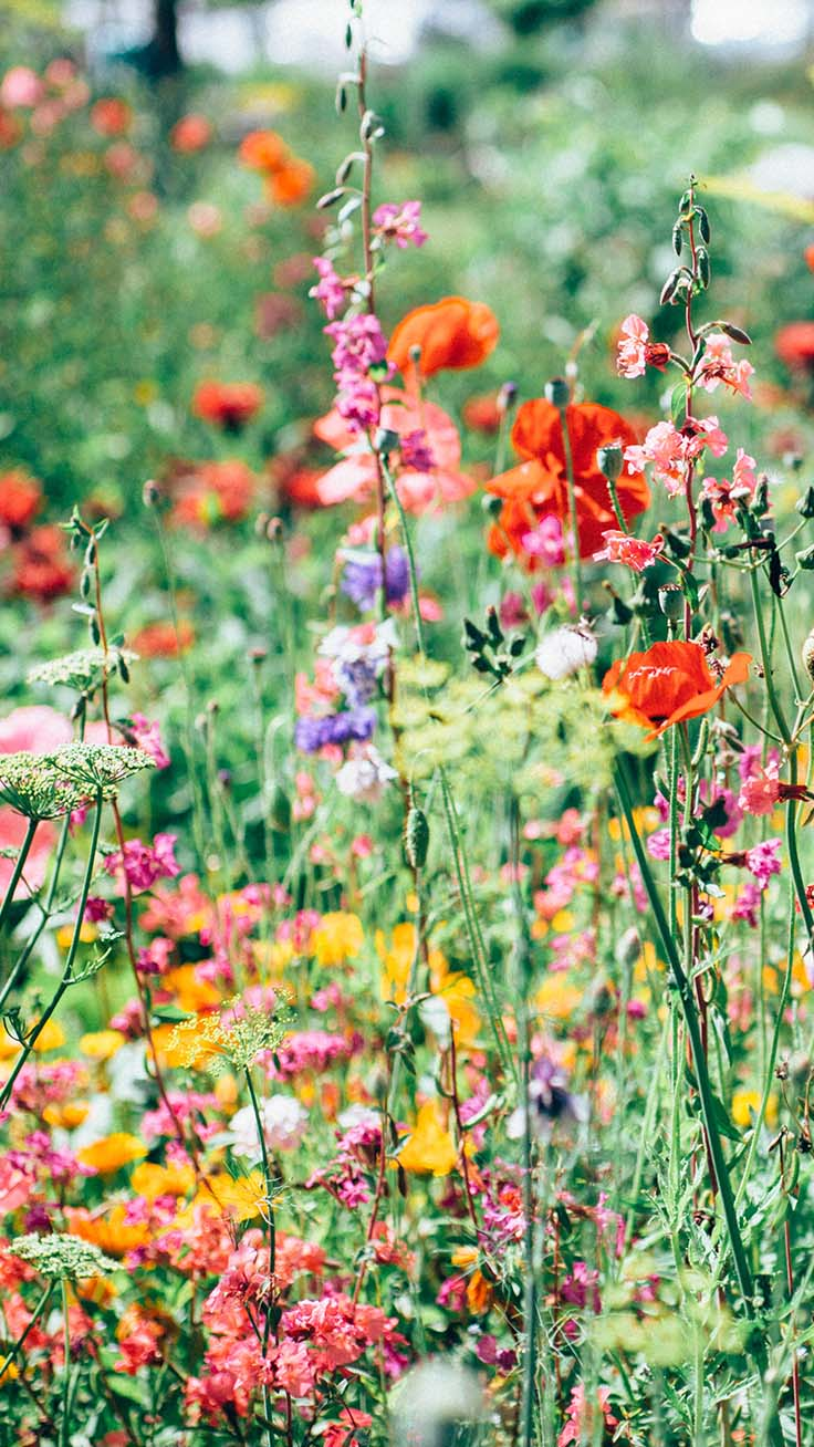 info for b4843 17324 Celebrating Summer with 21 Wildflower iPhone Wallpapers | Preppy ...
