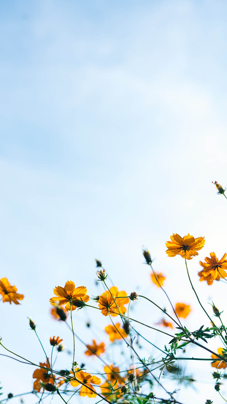 Celebrating Summer With 21 Wildflower Iphone Wallpapers Preppy