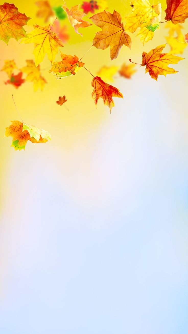 Autumn 2019 iPhone Wallpaper Collection