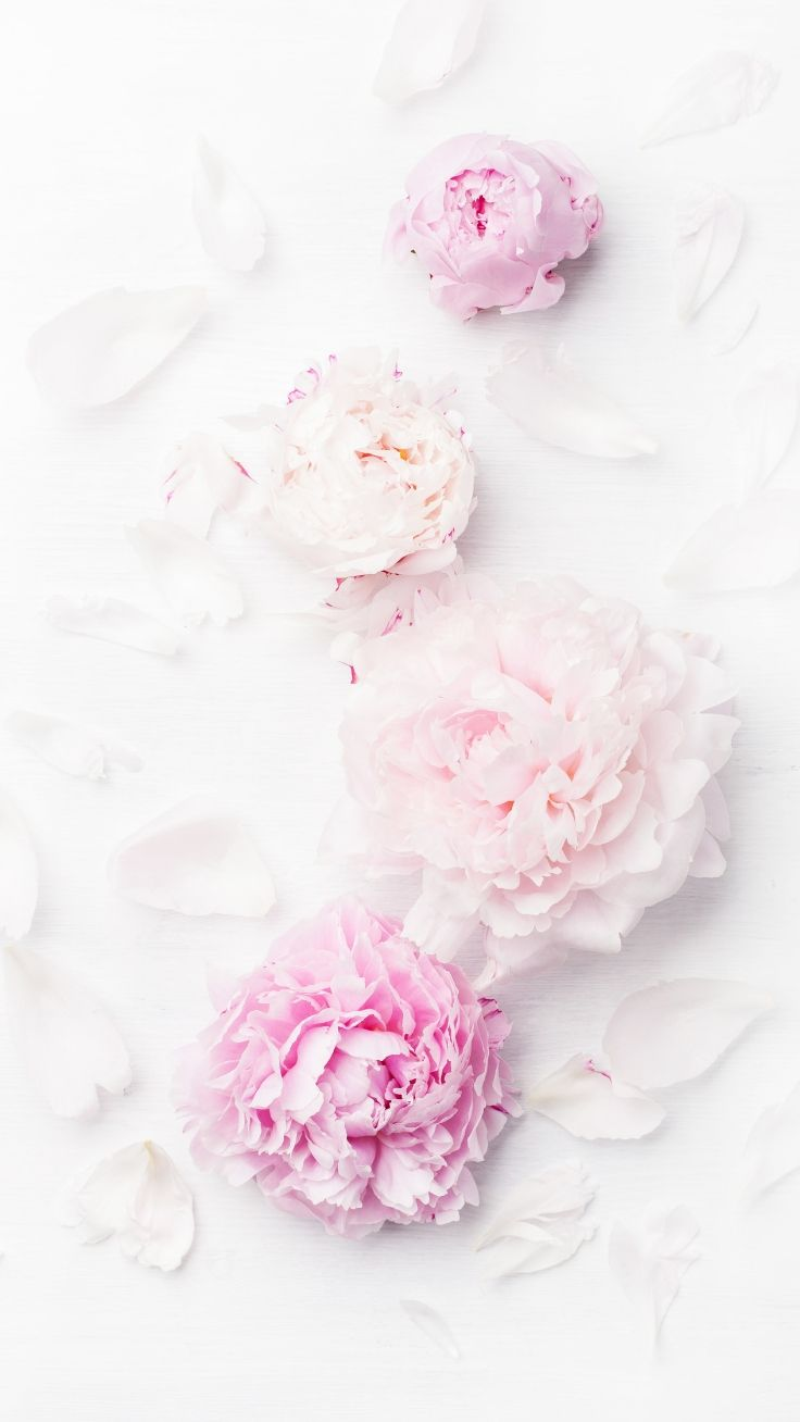 Gorgeous Floral iPhone Wallpaper Collection