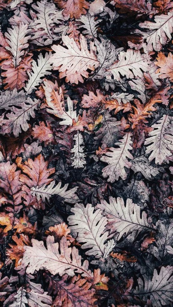 Fall iPhone Wallpaper - Top 25 Most Downloaded Preppy Wallpapers of 2019