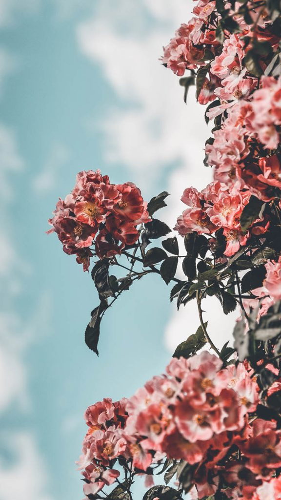 Pink Floral iPhone Wallpaper - Top 25 Most Downloaded Preppy Wallpapers of 2019